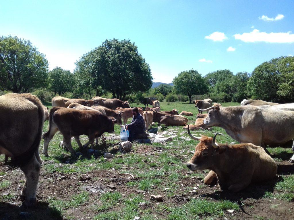 Visite et dégustation au Domaine de Ferrussac