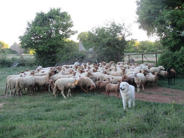 1 Journée avec visite de ferme